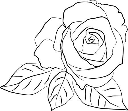 rose bud: rosa silhouette su sfondo bianco, illustrazione vettoriale Vettoriali