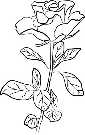 stroking: rose silhouette - freehand, vector illustration
