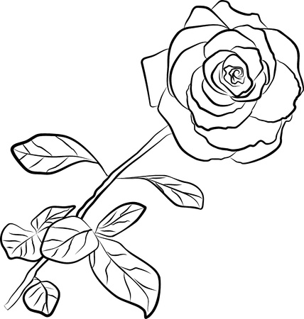 rose silhouette - freehand, vector illustration