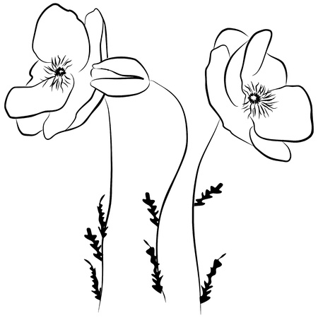flora: poppies flower - freehand on a white background, vector illustration Illustration