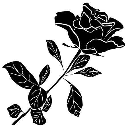 fekete-fehér: fekete rózsa sziluett - szabadkézi fehér háttér, vektoros illusztráció Illusztráció