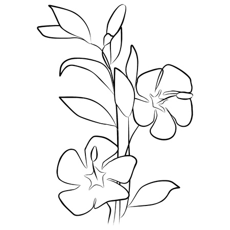simple flower: two flowers on branch - vector illustration