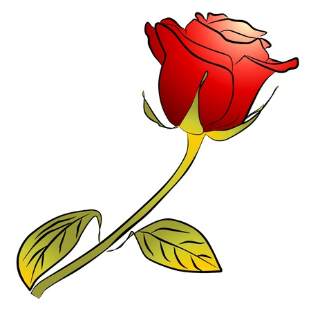 rosebud: one red rose on white background