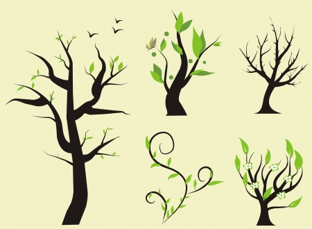 elm: set of trees, vector illustration Illustration