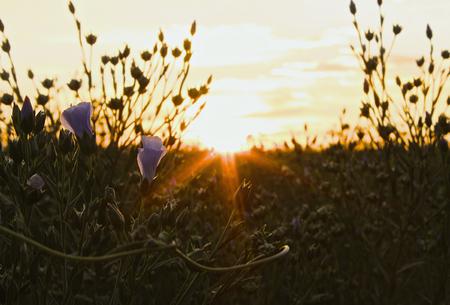 wild flowers: Wild Flowers Stock Photo
