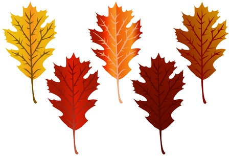 fall of the leaves: Fall Leaves