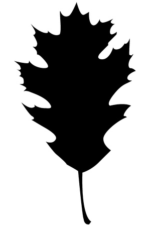 Northern Red Oak Silhouette