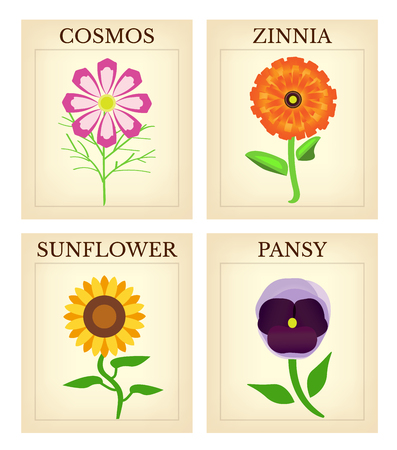 Flower Seed packets illustration