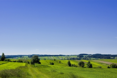 Green fields on a cloudless day