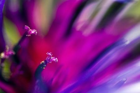 stami: Fiore viola - composizione astratta di petali e stami