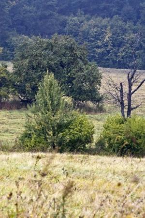 spatial: Polish landscapes - Roztocze Hills - Dahany