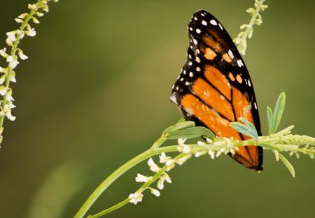 A part of a butterfly winglays broken on a piece of grass. Imagens