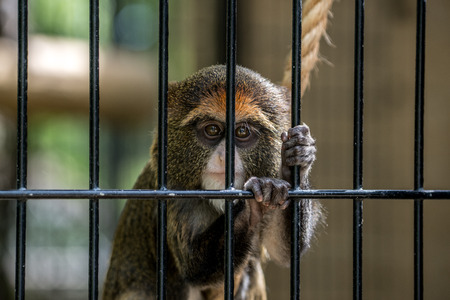 A cute monkey looks quite sad in his cage.