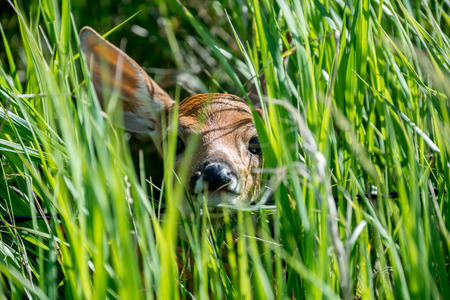 peekaboo: Peekaboo Deer