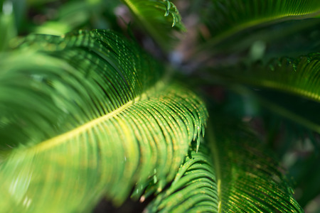 A lovely blurred photo of green foliage.