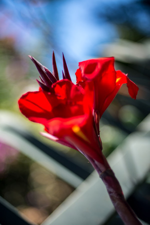 A beautiful red flower.