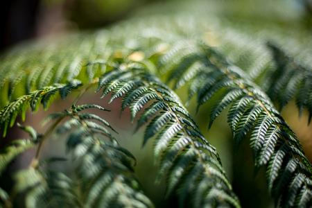 A soft focus fern plant. Stok Fotoğraf