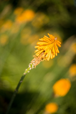 grouping: A nice grouping of yellow blossoms. Stock Photo