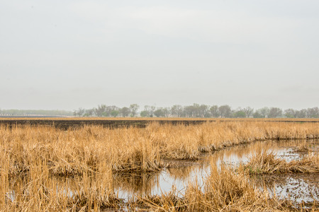 cattails: Early Spring Stock Photo