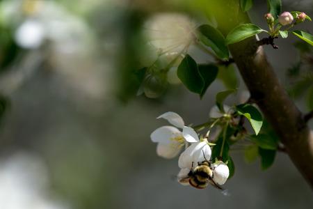 Bumble Bee Banco de Imagens