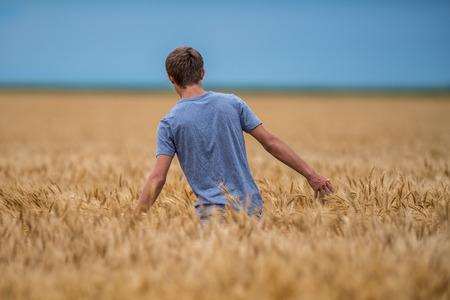 harvest field: A young man walks through a wheat field.