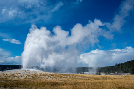 the faithful: Old Faithful geyser erupting in Yellowstone.