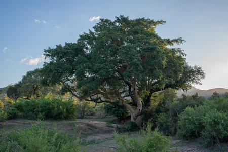 A beautiful landscape located in Kruger National Park, South Africa.