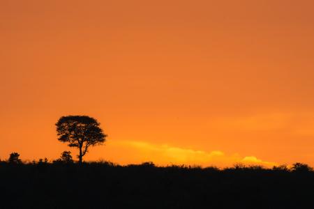 A beautiful golden orange sunrise in Kruger National Park, South Africa.