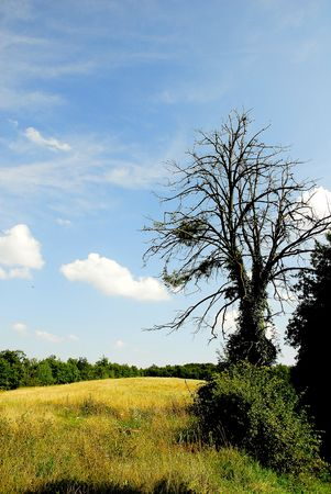 arbre: trees  Stock Photo
