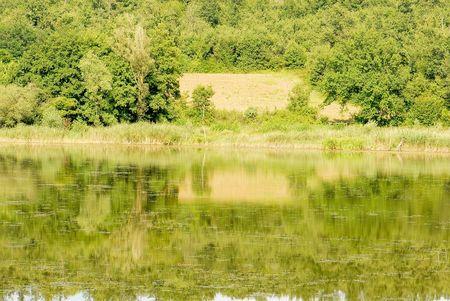 arbre: lake