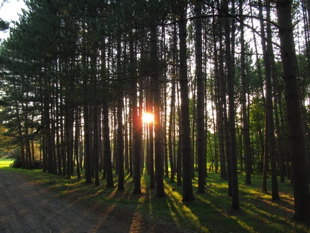north woods: North Woods