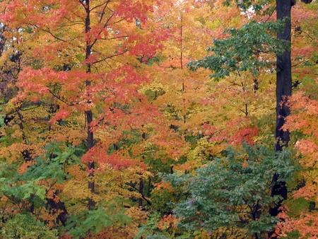Fall Trees Stock Photo - 10182735