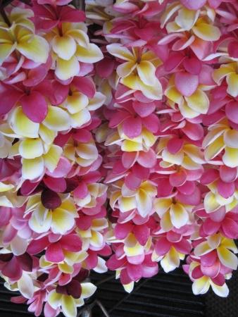 Hawaiian plumeria leis