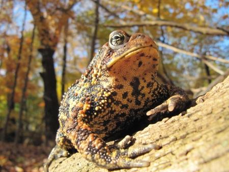 두꺼비 스톡 콘텐츠 - 13966769