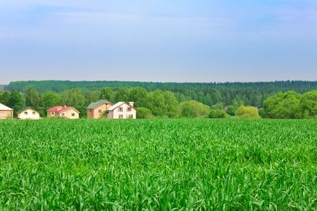 Green wheat field with some houses on background