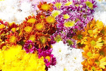 flowers bouquet shooting from the top point of view. multicolored flowers background 版權商用圖片