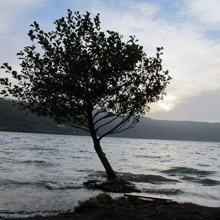 albero: LAGO CASTEL GANDOLFO ALBA