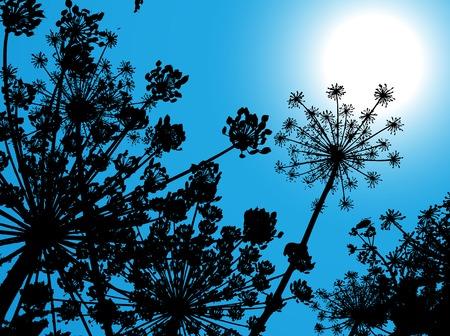 weeding: Cowparsnip. A vector illustration Illustration