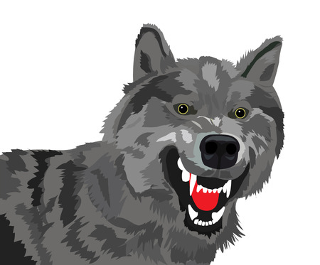 animal teeth: The image of the growling wolf on a white background Illustration