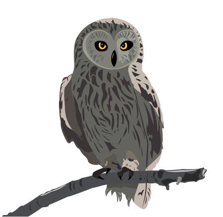 aves caricatura: La imagen del b�ho sentado en una rama