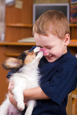 A little dog licking a young boys nose Stock Photo