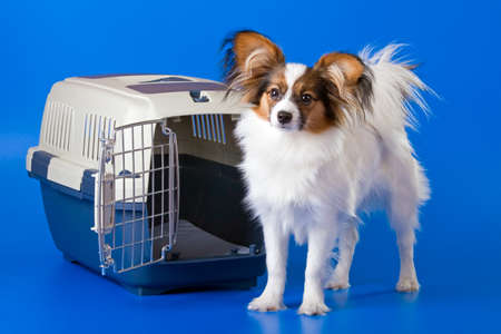 Young dog papillon and a plastic carrier Stock Photo - 4459876