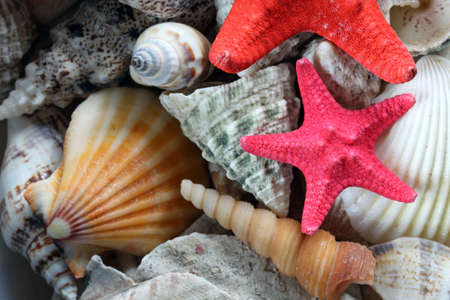 close-up of sea shell and starfish photo