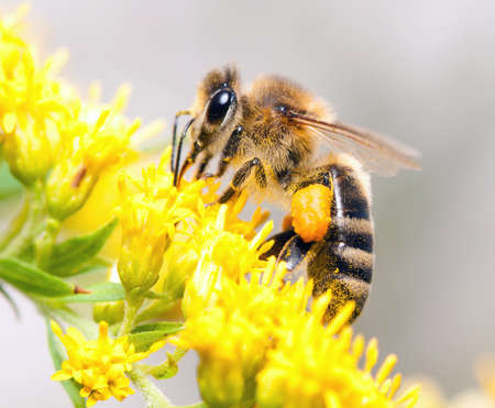 Bees collecting nectar from flower photo