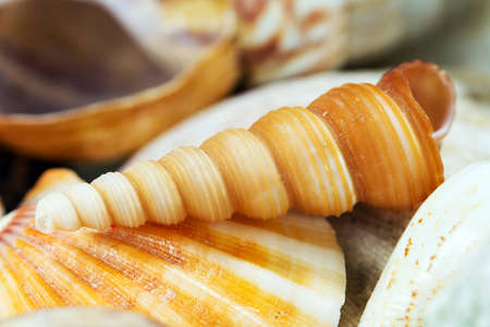 Composition of exotic shells close-up photo
