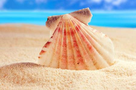 Seashell on the sandy beach photo