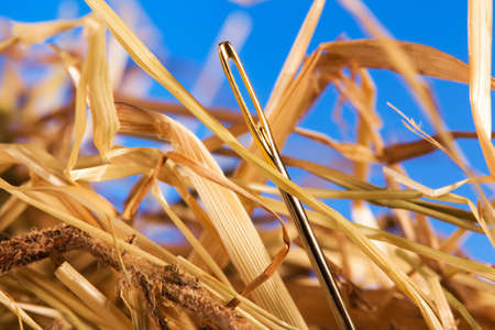 Close-up of a needle in a hay photo