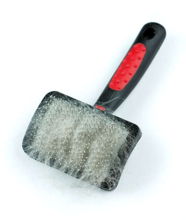 Brush for dog or cat with a scrap of fur photo