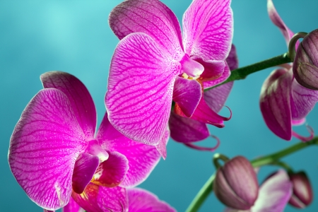 Close up of orchids in bloom 免版税图像