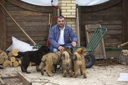 middle-aged man with puppies breed Tibetan Mastiff photo